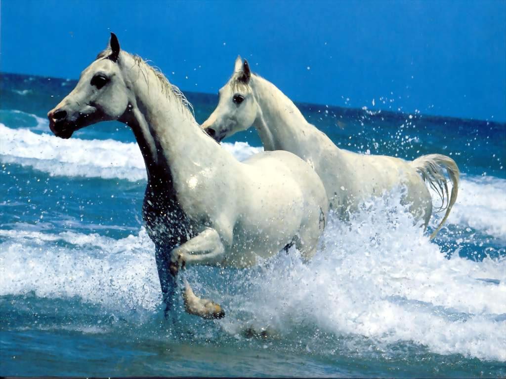 http://gallery.wallpaper.free.fr/fond-ecran/animaux/images/animaux_99827_jpg.jpg